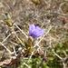 Blüte einer Akazie