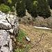 Das Gestein wechselt nun: hinten noch Nagelfluh des Speers, vorne bereits ein Kalkfels