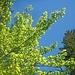 An diesem Tag in Österreich von politischem Interesse - grün oder blau?!?