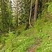 Über Jagdsteige auf den Buchbergkogel