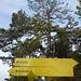 Waldaufstieg zum Vorderunnütz