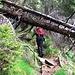 Vi sono tantissimi alberi caduti.