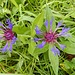 diese filigranen Blumen gefallen immer wieder