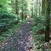 Angenehmer Waldweg