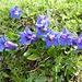 Eigentlch meine liebste Blume