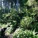 Danach ging es durch einen märchenhaften Wald, der mit Moosen und vielen Farnen bewachen ist. Die kühle Luft und das Gezwitscher der Vögel und der Duft des Waldes war einfach nur herrlich