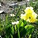 Jede Menge Frühlingsblumen standen am Wegesrand