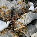 die letzten Herbstimpressionen auf Kalk zeigen sich im ersten Schnee