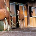 Auch die Pferde haben für Nachwuchs gesorgt.