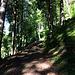 Weiter auf steilem aber sehr schönem Waldweg