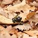Salamandra curiosa...