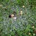 Benetztes Spinnennetz