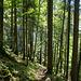 Zauberhafter Chälenwald