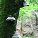 Pilze im Neckertal (Foto [U sglider])