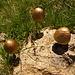 Vermutlich vom Goldesel abgesetzt: Goldroehrlinge (?) oberhalb Bon