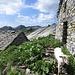 Una solitaria pecorella ci accoglie all'Alpe Ribia.