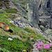 Es gibt viel zu entdecken: Fauna und Flora an der Panoramastrasse.