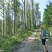 Auf Forststraßen geht es auf den Kleinobir