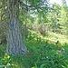 Auf Jagdsteigen auf den Kleinobir