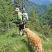 Abstieg zurück ins Tal