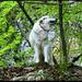 """Mein Hund posiert als <b>Oberwolf in der Wolfschlucht</b> (""""...das nächste Mal bitte ohne Halsband, damit es ein wenig authentischer aussieht"""" knurrte er - bzw. sie, da sie eine Madame ist - nach dem Fotoshooting in mein Ohr)."""