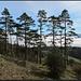 ...suggerieren die Bäume ebenfalls ein südliche(re)s Ambiente.