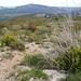 Immer wieder tolle Garrigue-Vegetation.