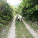 Dort kommen uns auch die Hunde aus le Serre entgegen.