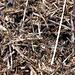 Ameisenhaufen im Detail.