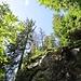 Wilde Landschaft beim Abstieg zum Feldsee