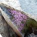 Blumenpracht im Abstieg