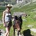 Due Mule e un cavallo