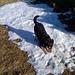 Bella im Schnee