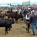 Viehmarkt in Karakol