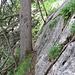 Eine schöne Passage auf dem Jägersteig, hier sichtete ich auch schon Orchideen.