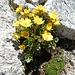 """Blumen in der Stein""""wüste"""""""