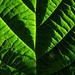 Auch der Herbst kann aussergewöhnliche Grüntöne präsentieren