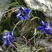 am Wegesrand oder die ersten Blumen nach 4 Tagen im Schnee