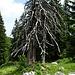 Dieser alte Baum könnte sicher viele Geschichten erzählen