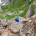 [u Timi] auf der Schuttterasse unterhalb des Gipfels und..