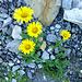Blumen suchen, finden, bestimmen