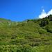 Zwischen den Alpenrosen und Heidelbeersträuchern gilt es den besten Weg selbst zu finden.