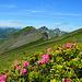 Blick über den Gipfelhang zur Gungera, Mittagsspitze und Hochblanken.