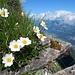 herrlich auch der Ausblick über den Grat Richtung Stockhorn