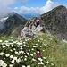 ... und der üppigen Blumenwiese vor dem letzten Gratabschnitt zum Gipfel