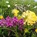 farbige Blumenwelt