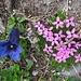 dazwischen schöne Flora