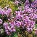 ... und im Blütenfeld