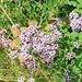 Schmetterlingsversammlung - Wieviele Schmetterlinge sind auf dem Bild zu sehen?