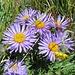 zurück in der herrlichen Blumenwelt